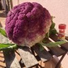 Help!!! Need a Recipe for Sicilian Cauliflower