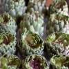 Carciofi alla Brace – Artichokes Cooked on Embers Recipe – Sicilian Artichokes
